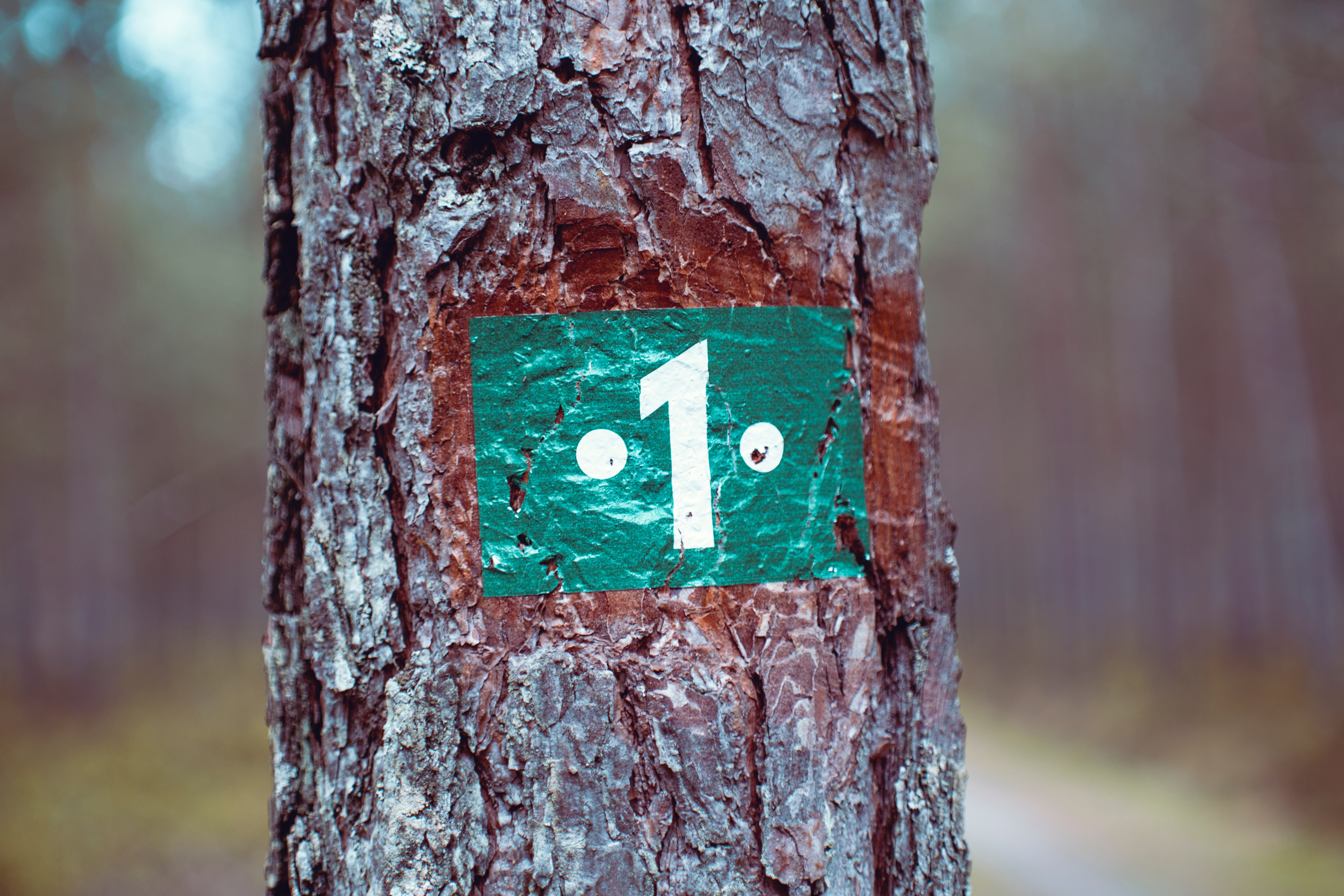 A white number 1 painted on to a green background on a tree trunk.
